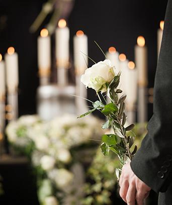 Osoba trzymająca białą różę